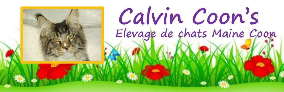 CALVIN COON'S