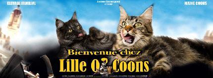 lilleocoons_banniere.jpg